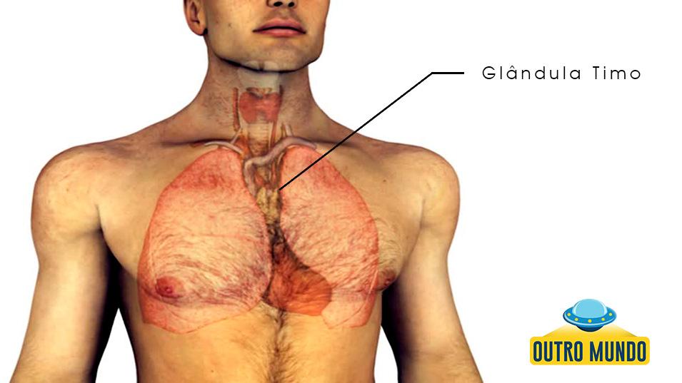 glandula-timo-outromundo2